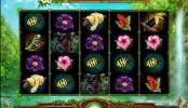 Rainforest Dream Video Slots by WMS